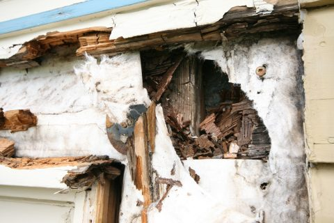 Ask Your Contractor: How do I Stop Exterior Wood from Rotting?